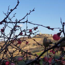 monte-vidon-corrado-osvaldo-licini (2)